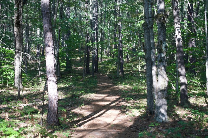 One of the side trails that leads up through the wood and connects back with the main trail.