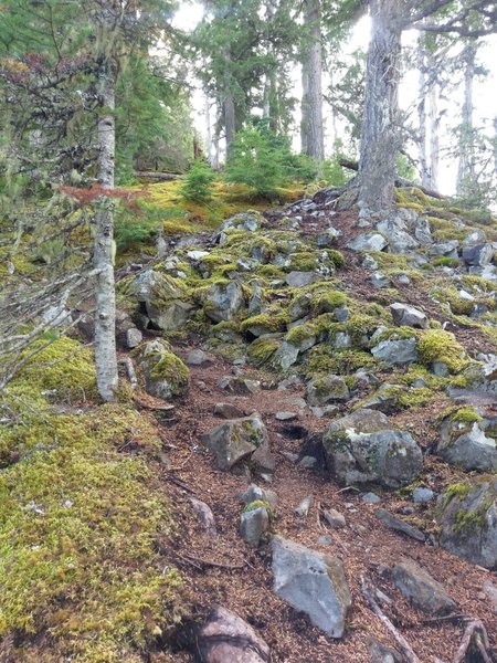 Mossy, steeper trail with ample rocks to negotiate on this section of trail