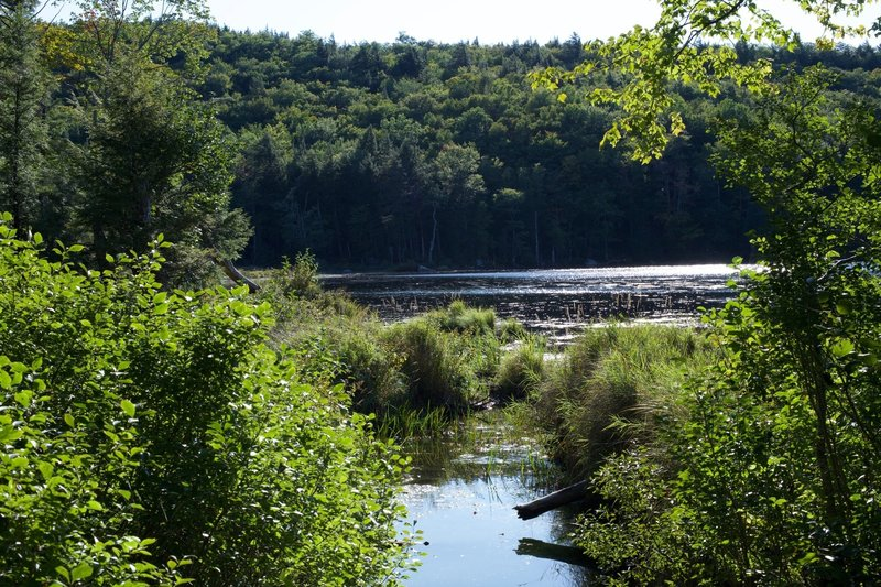 The upper end of Shell Pond as seen from the trail.