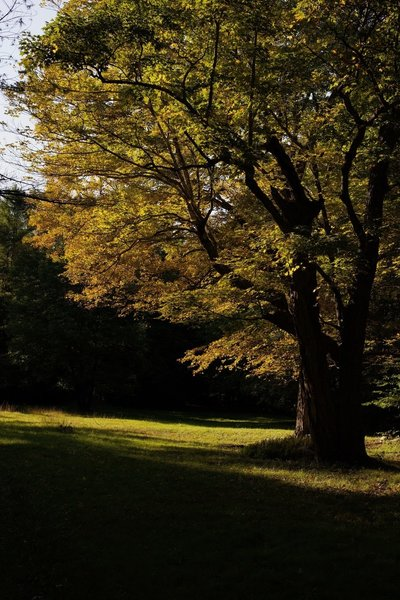 In the fall, the leaves change color and really glow in the evening.