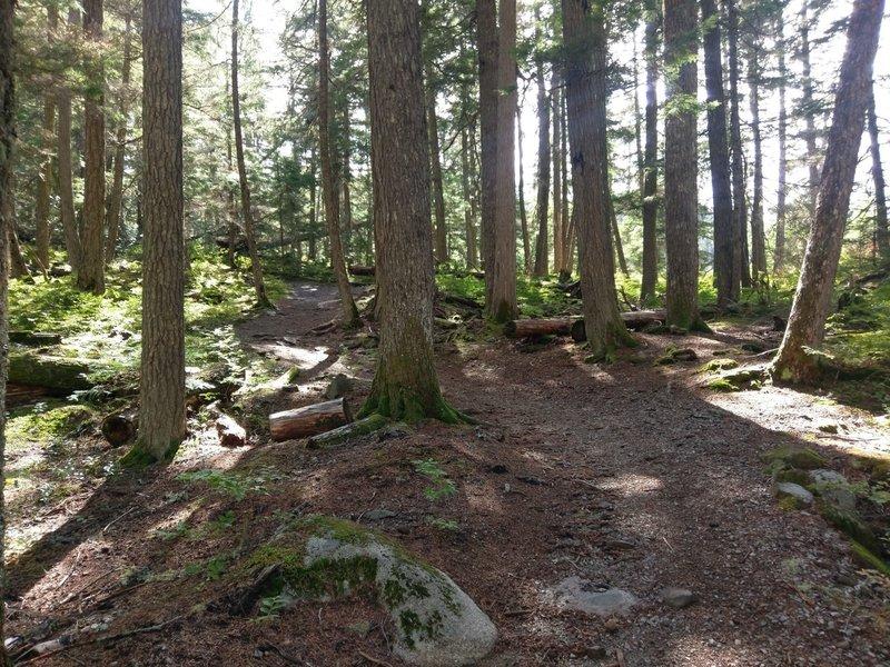 Rolling terrain along the Cheakamus