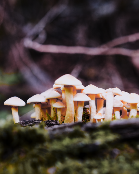Now that Autumn has arrived, mushrooms are sprouting everywhere
