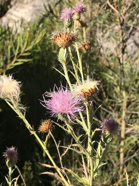 Wildflowers - Dry with prickly thorns -