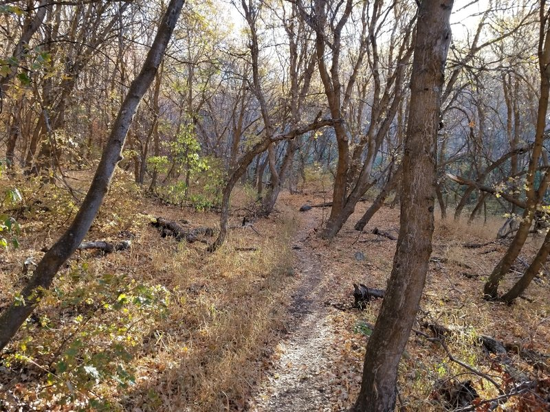 Hiking through Dry Canyon.