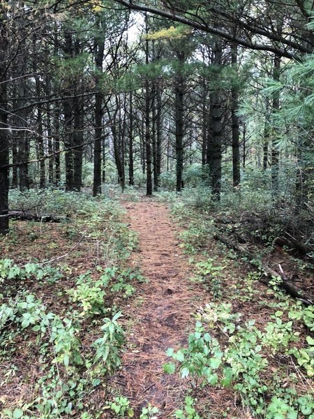 Wooded path to the main paved trail