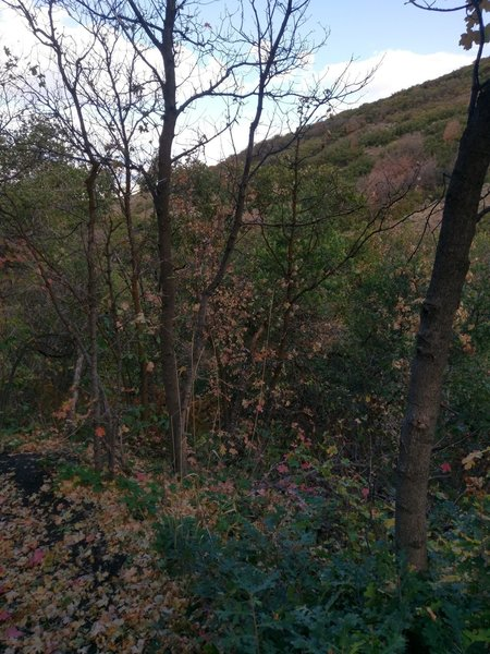Not many views at the start of the Hoof N Boot, fall colors are nice!