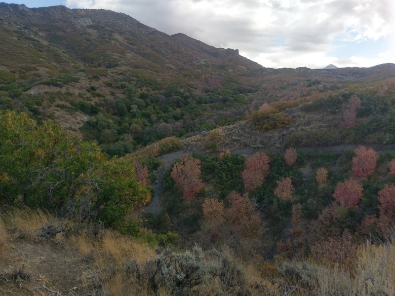 Fall colors in the canyon