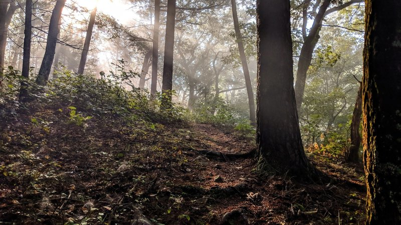Morning rays break through the fog in the Delaware Water Gap National Recreation Area
