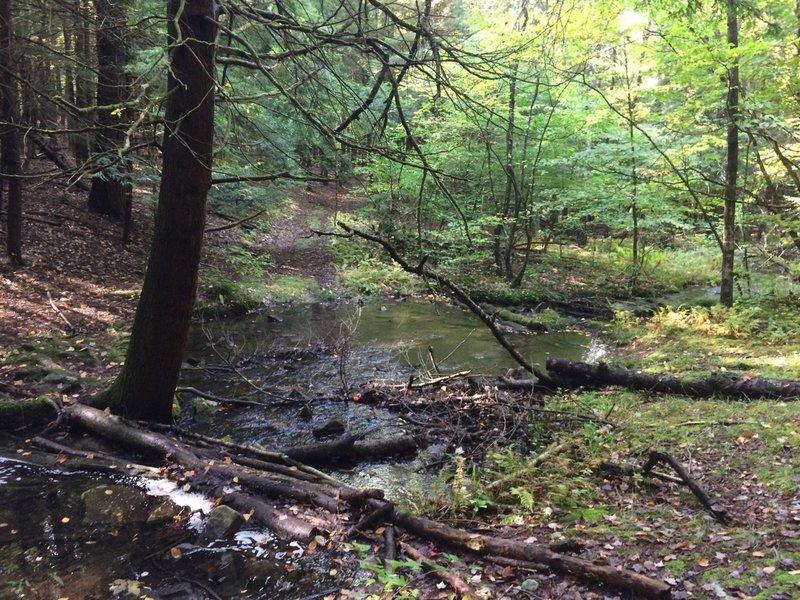 Shelly Brook stream crossing on Mud Lake Trail