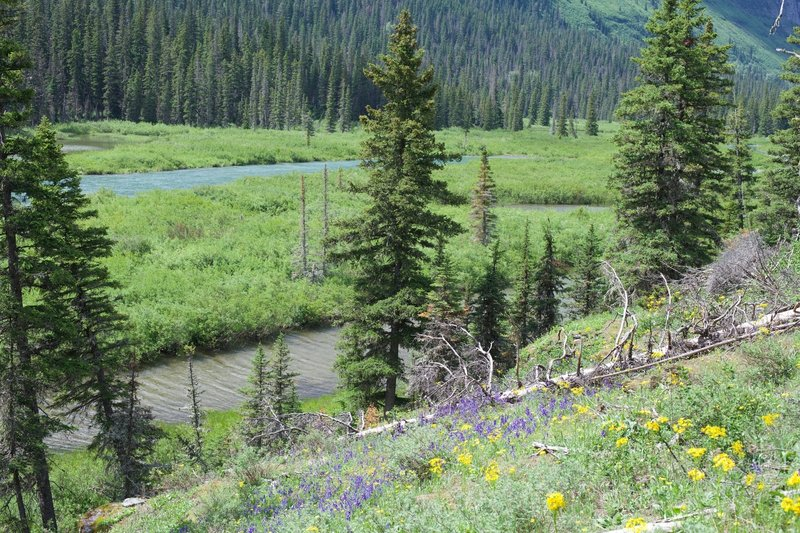 The Saint Mary River runs below the trail.  Depending on the time of day, you might see a moose around here.