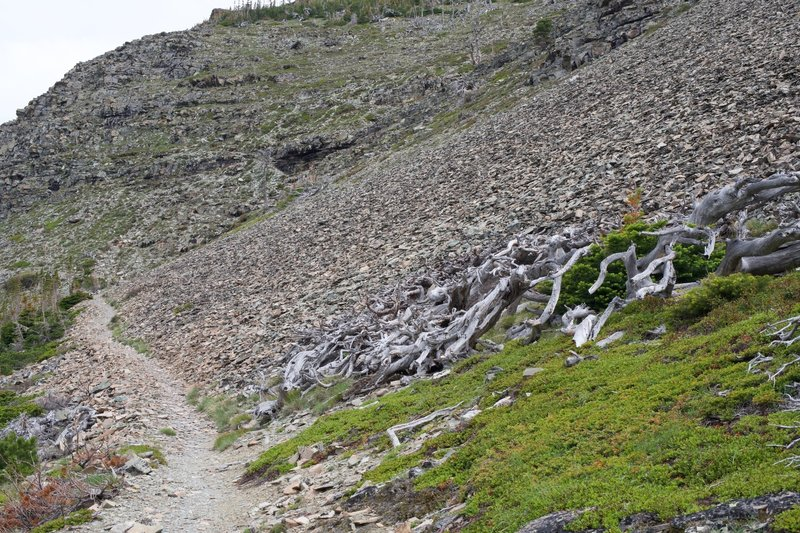 As the trail climbs, you leave the woods behind and begin making your way through scree fields.