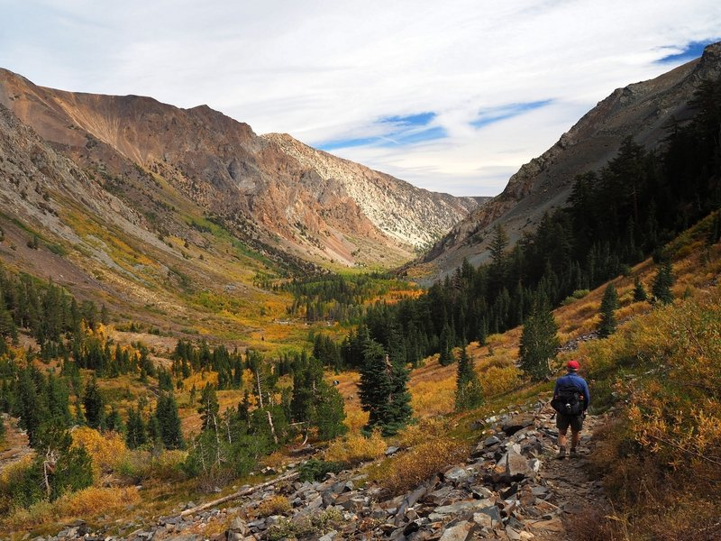 Fall color in Lundy Canyon