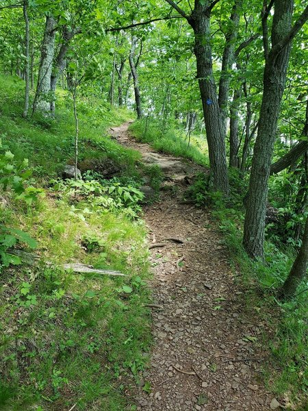 Singletrack trail
