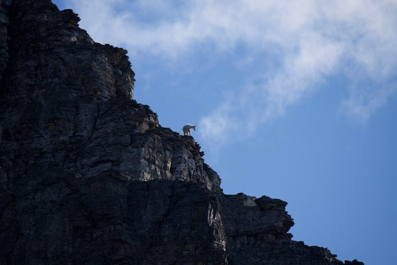 Mountain Goats are known for frequenting the trail. Be on the lookout on the rocks of Clements Mountain, as they can be seen navigating the rocks.