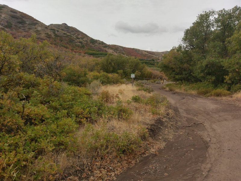 Wide, mellow path on the Main Line Beginner Trail