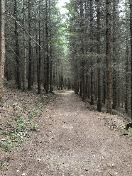 Path in forest on Trail Jarnik