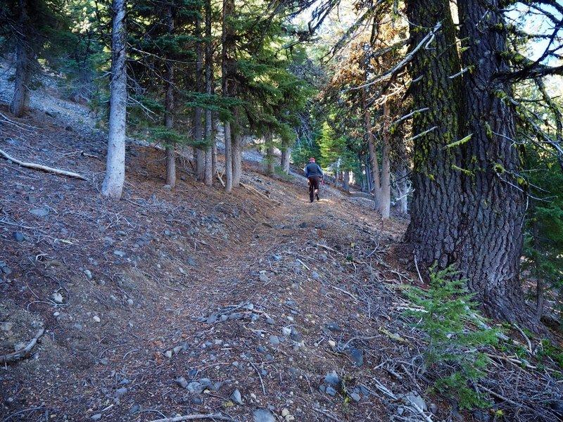 Start of the Goosenest Trail