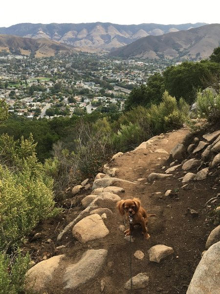 Dog friendly trail with beautiful views of all of San Luis Obispo.