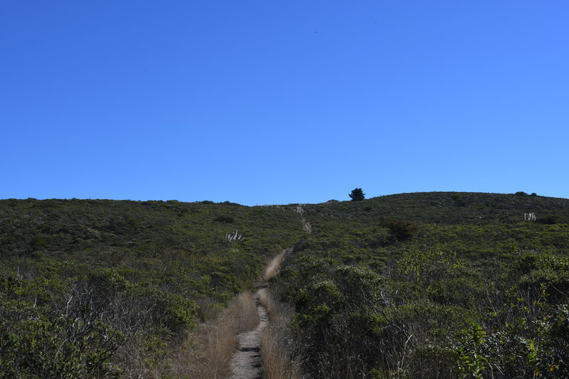 The French Trail approaches the intersection of the Clipper Ridge Trail.