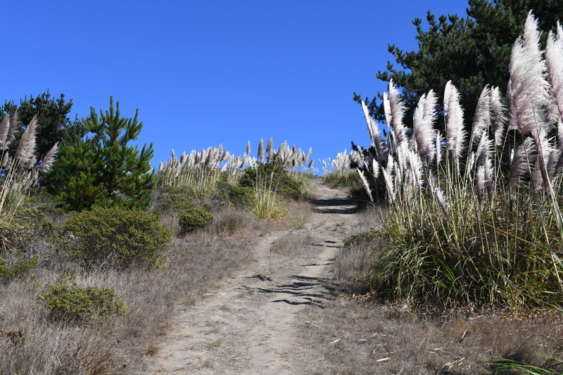 While the trail does flatten out at the top, there is quite a climb to get there. Like most trails in the park, you get a good view of the ocean if you turn around.