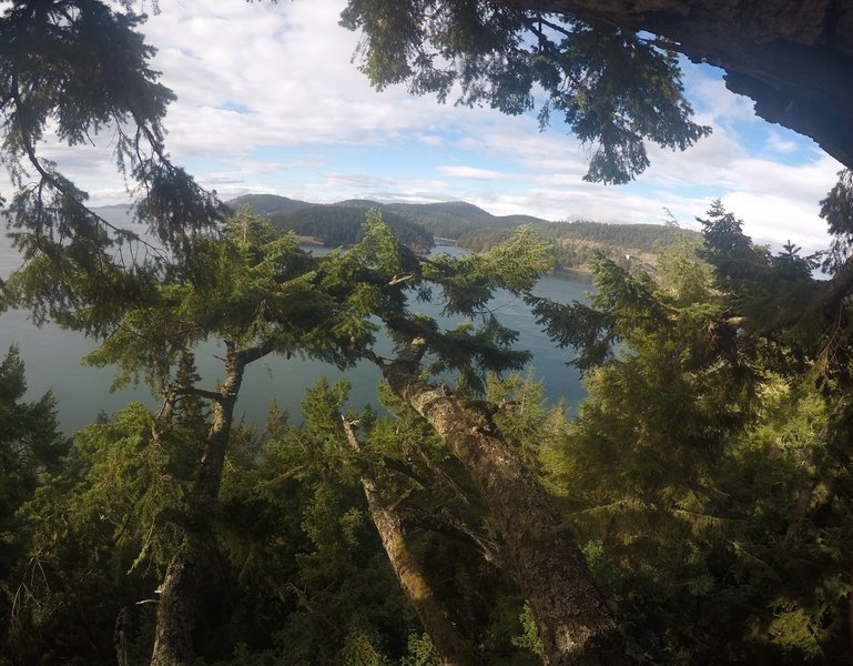 Looking over to Bowman Bay, from the top of the tree.