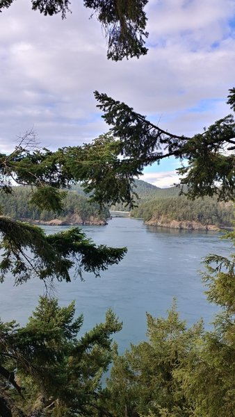 Get an bird's eye view of Deception Pass, from the top of the trees.