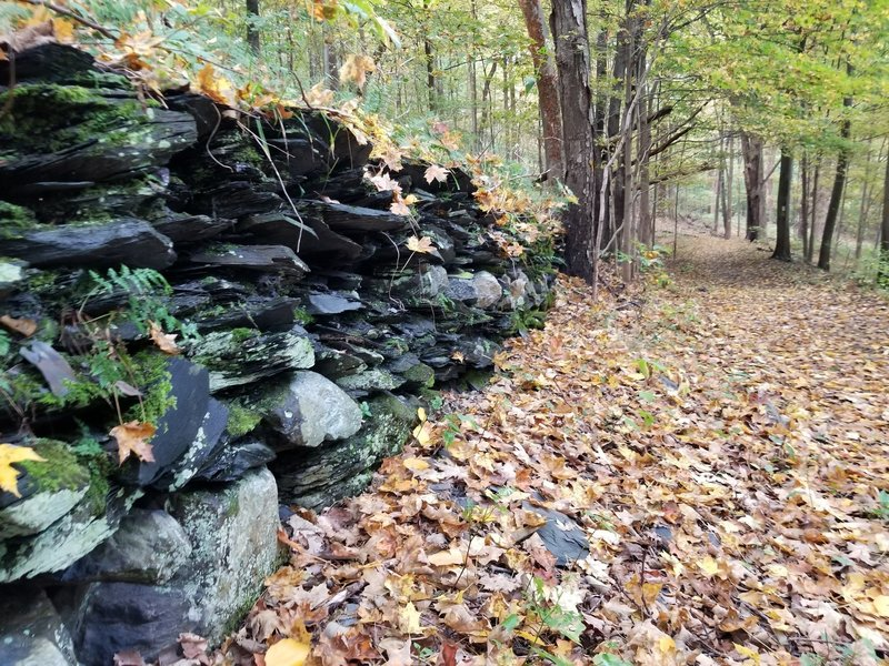 Remnants of a rock wall along the Arrow Island Trail.