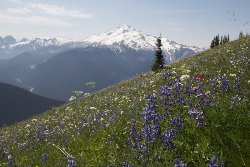Glacier Peak from Miner's Ridge