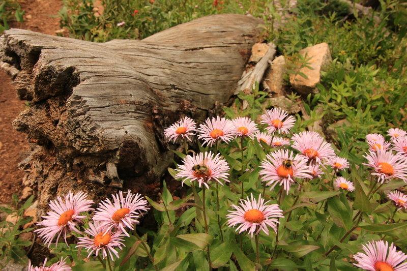 Wildflowers along the ascent to Watanga Lake