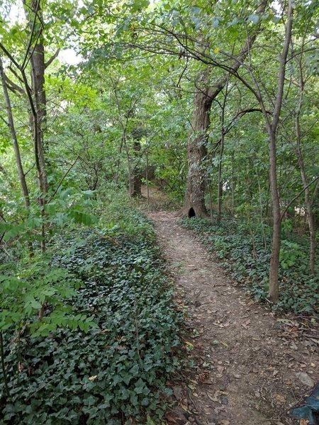 Prospect Park W trail
