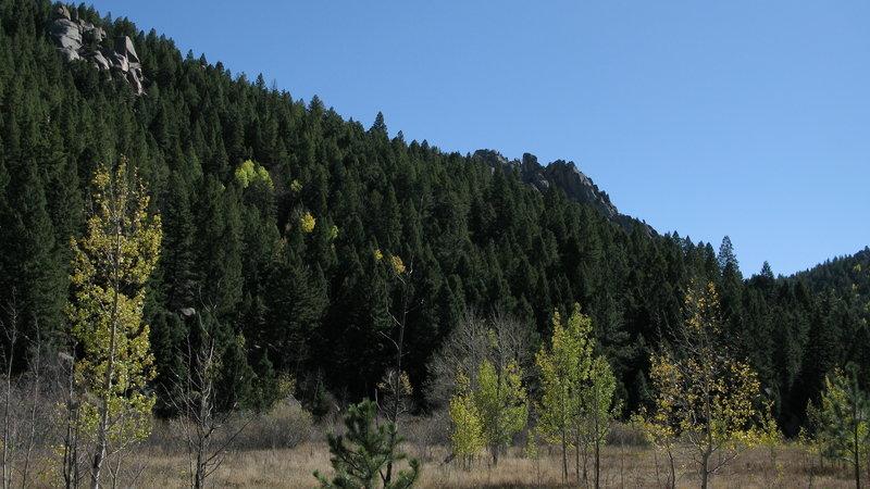 Aspens in Limbaugh Canyon