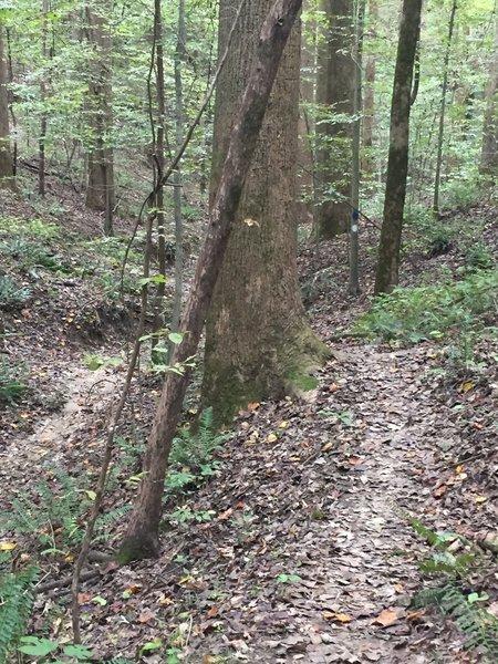 Pioneer Springs Trail