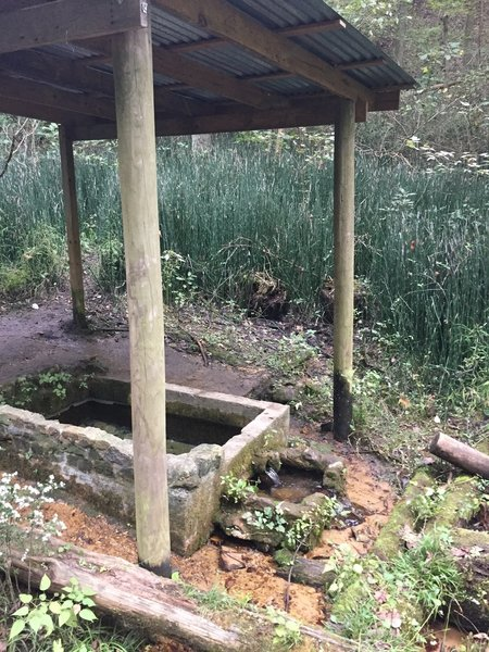 Spring on Pioneer Springs Trail