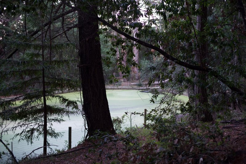 Salamander pond as seen from the approach on Redwood Trail.