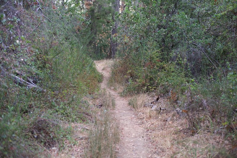 Between Bear Gulch Trail and Bear Gulch Road, the trail is a singletrack, dirt trail where the vegetation grows close to the trail due to the lack of use.