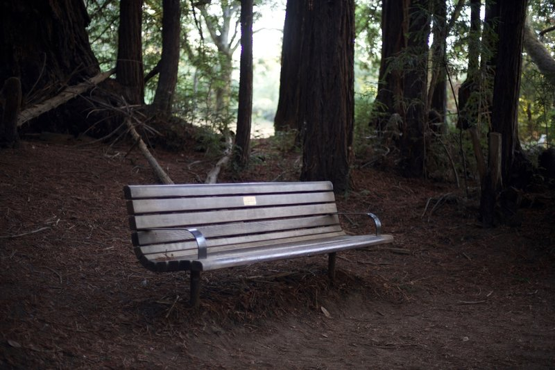 Benches like this one on the Redwood Trail, can be found sprinkled throughout Wunderlich Park. They are a good place to take a break as many trails climb up into the park.