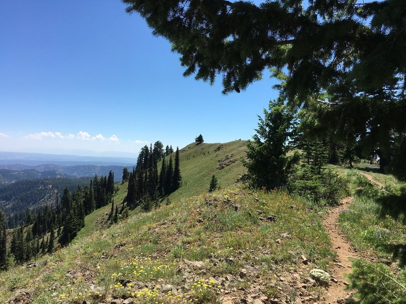 Trail on the approach to the Oregon Butte Lookout