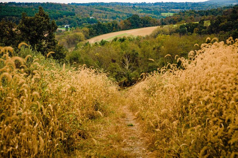 Through open fields