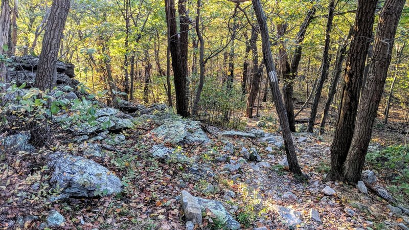 Typical trail terrain in between the many viewpoints along the AT in northern New Jersey.