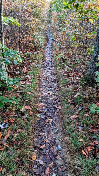 Singletrack is the best track.