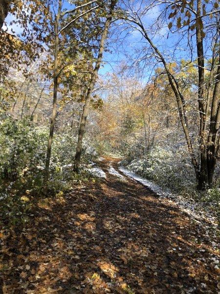 Wooded hill climb