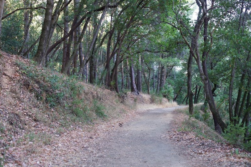 Oak trees line the trail and provide shade on hot summer days.