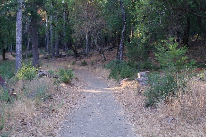 The trail as it departs from the intersection with the Meadow Trail.