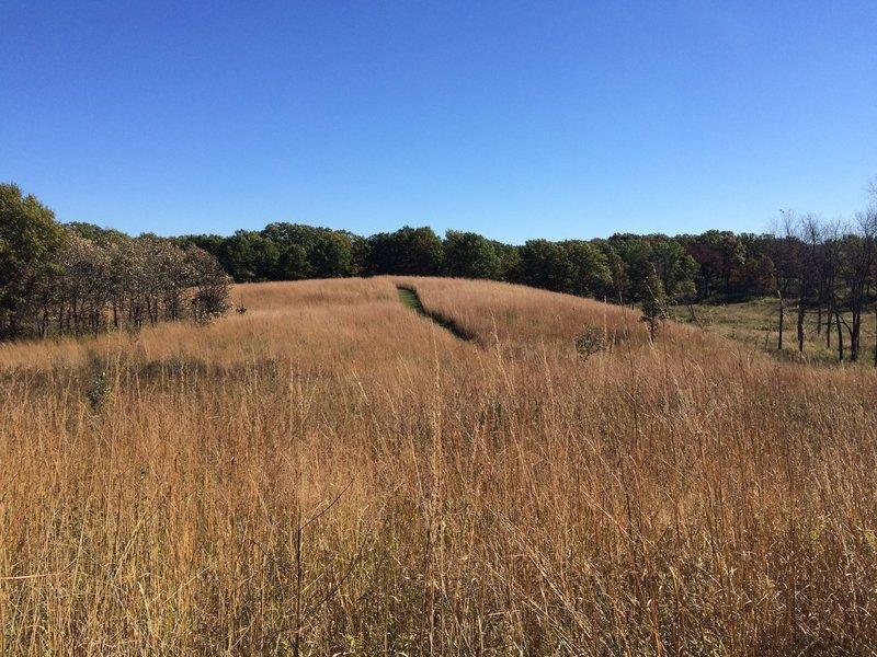 grassy path heading east