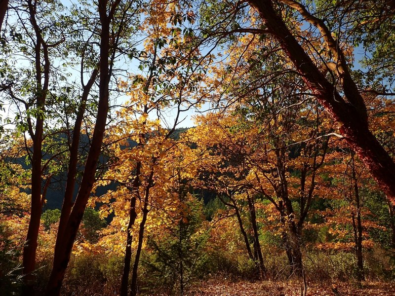 Fall color along the Legburner Trail
