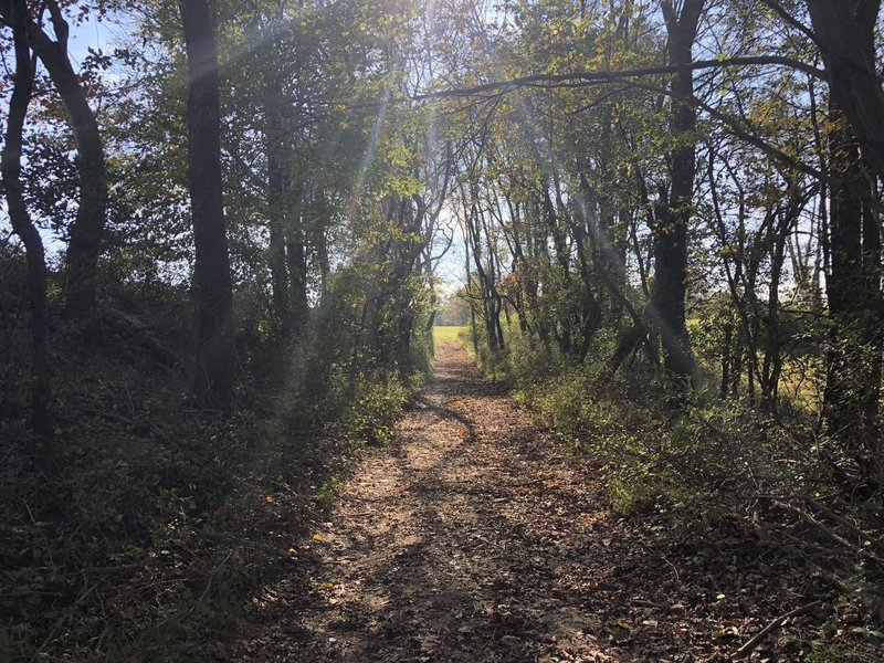 Through woods section