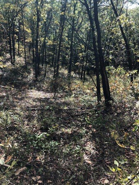 Cowles Bog Trail