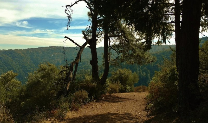 Deep in the Santa Cruz Mountains, Knob Trail climbs to the top of Knibbs Knob, 2,694 feet.