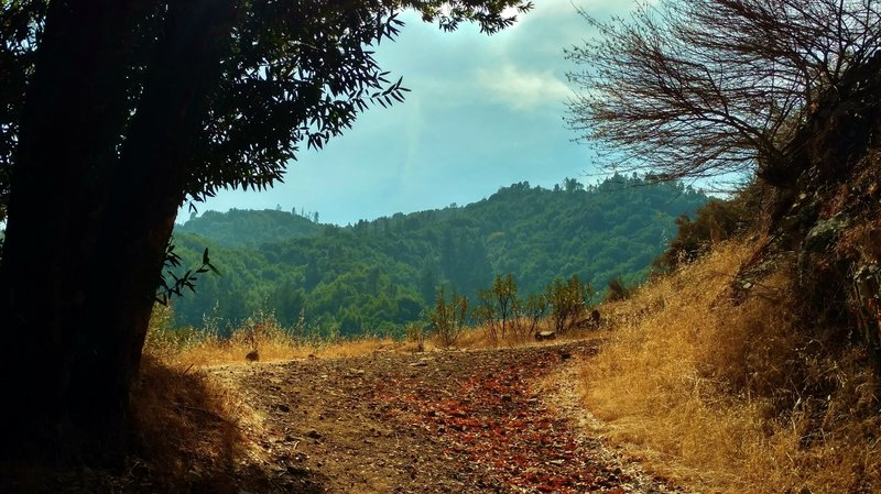 Deep in the Santa Cruz Mountains, Knibbs Knob Trail rounds one of several switchbacks as it climbs the ridge separating the Swanson Creek and Uvas Creek valleys.