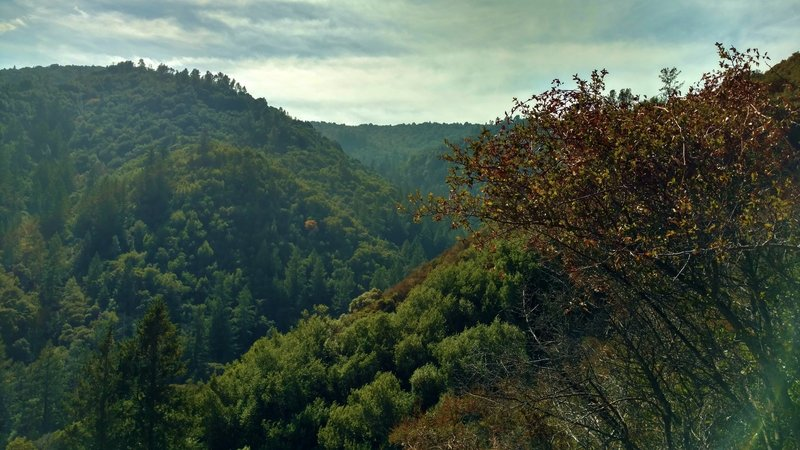 The Swanson Creek Valley deep in the rugged Santa Cruz Mountains, drops off below Knibbs Knob Trail.